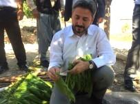 DİSİPLİN KURULU - Milletvekili Aydın'dan Tütün Üreticilerine Büyük Müjde