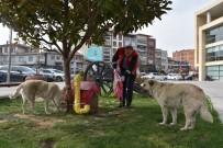 HAZıR YEMEK - Akhisar'da Sokak Hayvanları Unutulmadı