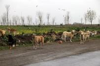 HASAN AKGÜN - Büyükçekmece Belediyesi, Sokak Hayvanlarını Unutmadı