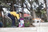 CAMİİ - Eyüspultan'da Sokak Hayvanları Unutulmadı