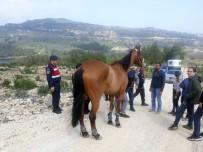 YARIŞ ATI - Kaybolan 100 Bin Liralık At, Ormanlık Alanda Bulundu