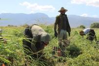 JANDARMA GENEL KOMUTANLIĞI - Aydın'da Tarım İşçilerine Korona Virüs Tedbiri