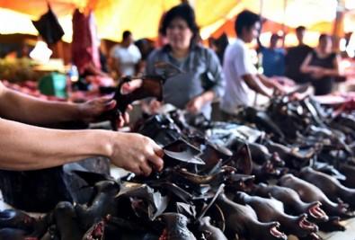 Çin o hayvan pazarını tekrar açtı!