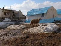 HASAR TESPİT - Depremde telef olan hayvanların bedelleri ödenecek
