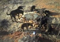 YAŞAM MÜCADELESİ - Herkes Evine Kapanmışken Onlar Sokak Hayvanları İçin Dışarıda