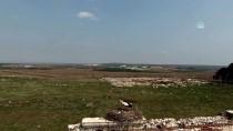 ELEKTRİK DİREĞİ - Tarihi Hastane Duvarının 'Mevsimlik Misafirleri' Gelmeye Başladı