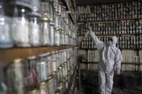 HOLLANDA - Virüse karşı müzesindeki 4 ton parayı dezenfekte etti