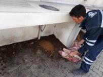 REHABİLİTASYON MERKEZİ - Biga'da Sokak Hayvanlarına Yardım