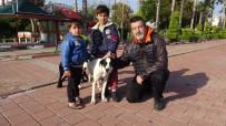 HAYVAN HAKLARı - Zor Günler Yaşayan Sokak Köpeklerine Mama Desteği