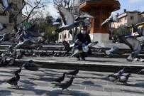OSMANGAZI BELEDIYESI - Osmangazi'de Aç Kalan Güvercinler Beslendi