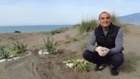 SINIF ÖĞRETMENİ - Öğrencilerinden Ayrılan İlkokul Öğretmeni Kum Zambaklarını Kimsesiz Bırakmadı