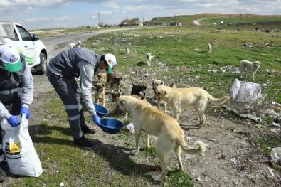 Konya'da Sokak Hayvanlarını Beslemek İçin Ek Tedbir Alındı