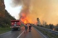ORMAN ARAZİSİ - Orman Yangınında 800 Arı Kovanı Kül Olan Teyze Gözyaşlarına Boğuldu