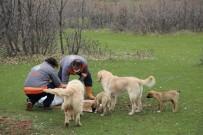 HALKLA İLIŞKILER - Bingöl'de Sokak Hayvanlarına Yem Ve Mama Bırakıldı