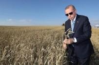 CUMHURBAŞKANLIĞI - Erdoğan, Başkan Öz'ün Dile Getirdiği Talebi Çözüme Kavuşturdu