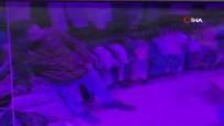 İSTANBUL EMNİYET MÜDÜRLÜĞÜ - Fatih'te İş Yerinde Cep Telefonu Hırsızlığı Kamerada