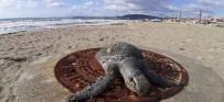 BİLİM KOMİSYONU - Kuşadası'nda 1 Ayda 8 Deniz Kaplumbağası Ölü Olarak Bulundu
