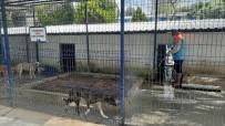 REHABİLİTASYON MERKEZİ - Kuşadası'nda Hayvan Bakım Ve Rehabilitasyon Merkezi Dezenfekte Edildi