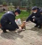 YAVRU KÖPEK - Yavru Köpek Jandarma Bakımında