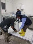 MıSıR - Amasya'da Süt Evleri Çoğalıyor