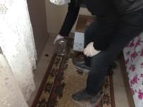 ORMAN MÜDÜRLÜĞÜ - Aydın'da Ölü Yarasanın Bulunduğu Ev Dezenfekte Edildi