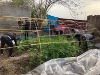 UYUŞTURUCU TİCARETİ - Bahçesine Hint Keneviri Serası Kuran Zanlıdan Korona Savunması