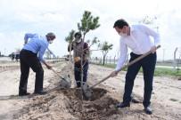 HAMDOLSUN - Başkan Hasan Kılca Açıklaması 'Korona Ağaç Sevgimizi Engelleyemez'