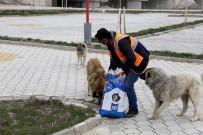 KÖPEK - Gürpınar Belediyesi Sokak Hayvanlarını Yalnız Bırakmadı