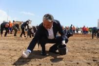 MıSıR - Muratpaşa Belediyesi, Gıda Krizi Riskine Karşı Mısır Ekimine Başladı