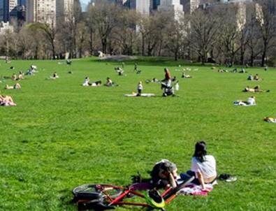 New York'ta parklar geçici mezarlık olabilir