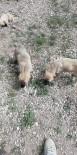 YAVRU KÖPEKLER - Ölüme Terk Edilen Yavru Köpeklere Belediye Sahip Çıktı