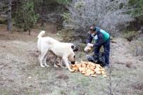 SOKAK HAYVANLARI - Yozgat'ta Yiyecek Bulmakta Sıkıntı Çeken Sokak Hayvanları Unutulmadı