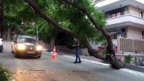ANKARA BÜYÜKŞEHİR BELEDİYESİ - Başkentte fırtına nedeniyle ağaçları devirdi!