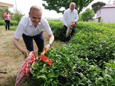 CHP Giresun Milletvekili Tığlı, Yaş Çay Fiyatını İyi Buldu, Kotayı Eleştirdi