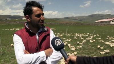 Saç Sakal Tıraşından Kazandığı Parayla Kaz Çiftliği Kurdu