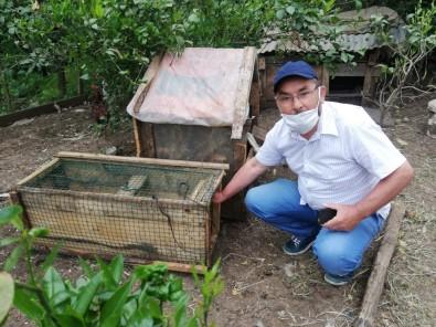 Kümesindeki Yumurtaları Yiyen Sansarı Kurduğu Düzenekle Yakaladı, Hesap Sordu, Sonra Doğaya Saldı