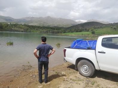 Yeniköy Göletine 40 Bin Sazan Yavrusu Bırakıldı