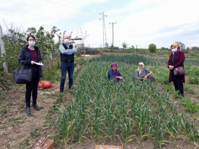 Kırklareli'de Tarımsal İstatistik Çalışmaları TÜİK Sisteminde