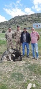 Çukurca'da Sokak Hayvanlarına Mama Verildi