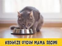 HAREKETSİZLİK - Kedinize Uygun Kedi Maması Nasıl Seçilir? (Yaş ve Cinse göre öneriler)
