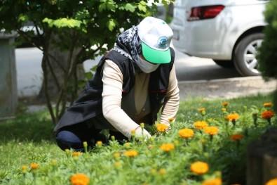 Odunpazarı Çiçek Bahçesine Dönüşüyor