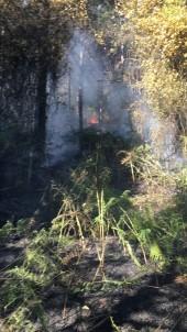 Sancaktepe'de Orman Yangını