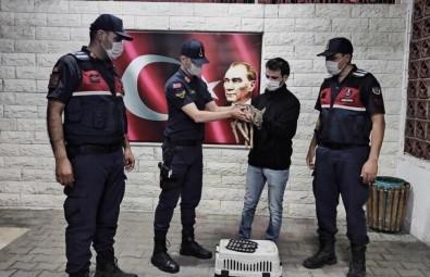 Yavru Karacaya Jandarma Şefkati