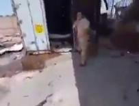 ASKERİ HAVA ÜSSÜ - Hafter'den kurtarılan yerde içi ceset dolu konteyner bulundu