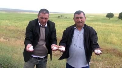 Aksaray'da Dolu, Ekili Alanlara Zarar Verdi