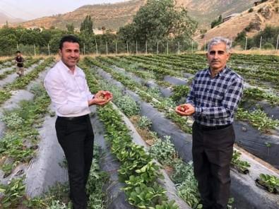Derecik İlçesinde Sebze Yetiştiriciliği