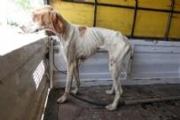 SINIR KAPISI - Kırklareli'nde korkunç görüntü! Çok sayıda telef olmuş sokak köpeği bulundu