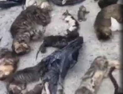 CHP'li Belediye kedileri katletti iddiası!
