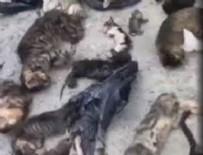 HAYVAN - CHP'li Belediye kedileri katletti iddiası!
