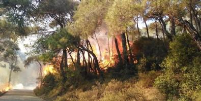 Heybeliada'da çıkan orman yangını kontrol altına alındı! 3 kişi gözaltına alındı